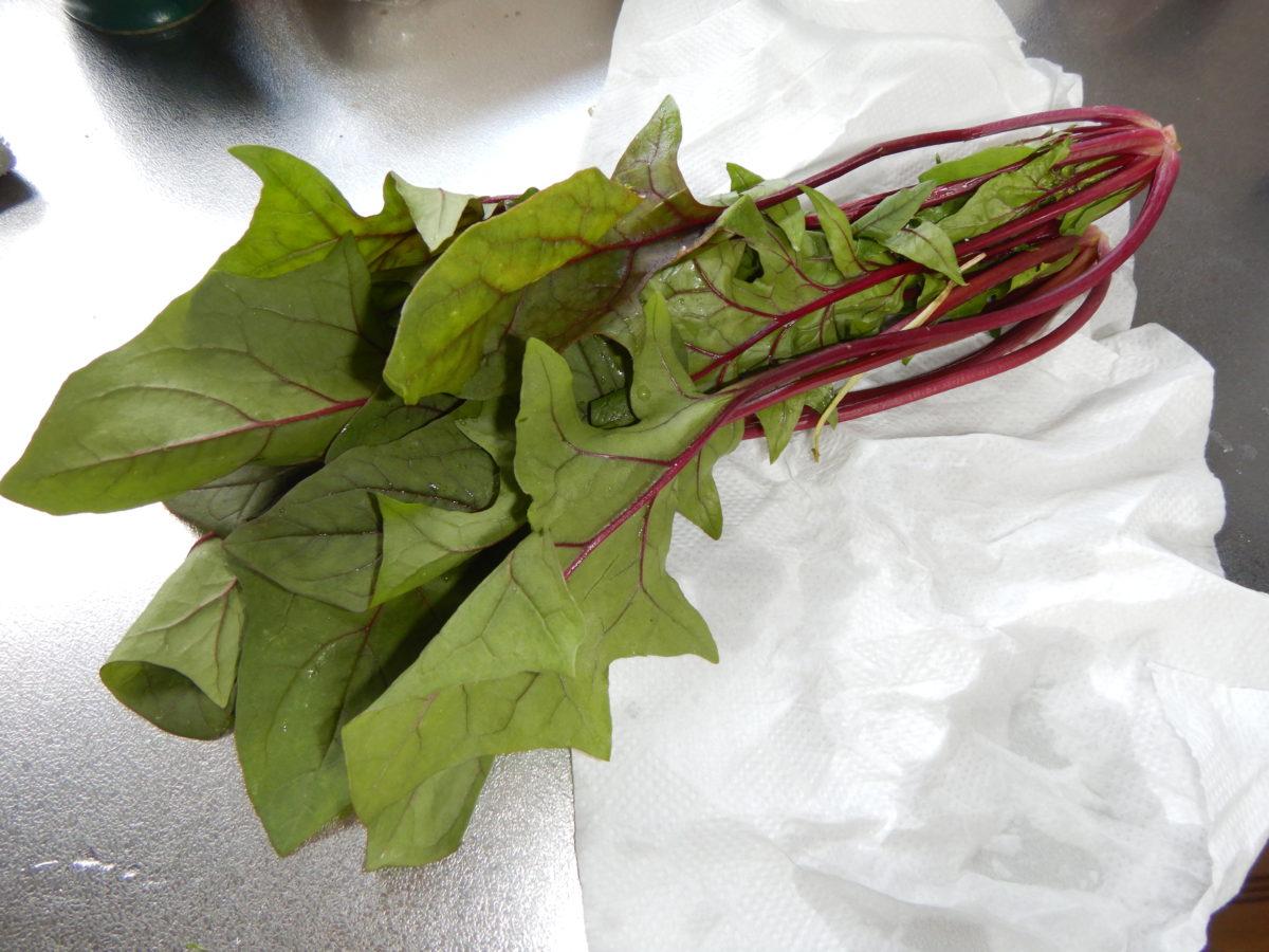 サラダほうれん草の食べ方!9品目サラダレシピを紹介!
