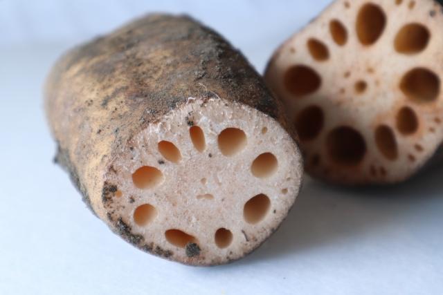 れんこんの効能が凄い!花粉症などのアレルギーにも効果?簡単レシピも!