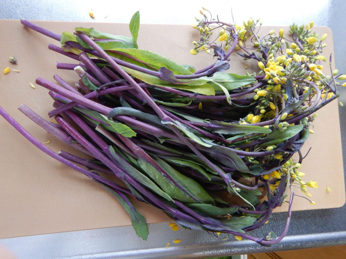 紅菜苔(こうさいたい)の味や食べ方とは?炒め物などの簡単レシピ4選!