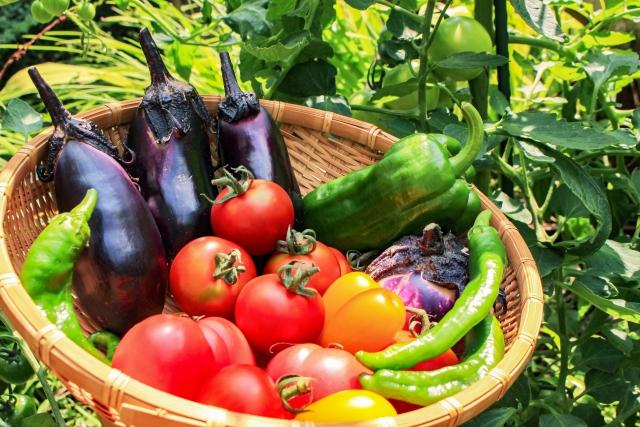 【ハナタカ】トマト、人参、ピーマンの見分け方!苦くないゴーヤの選び方とは?