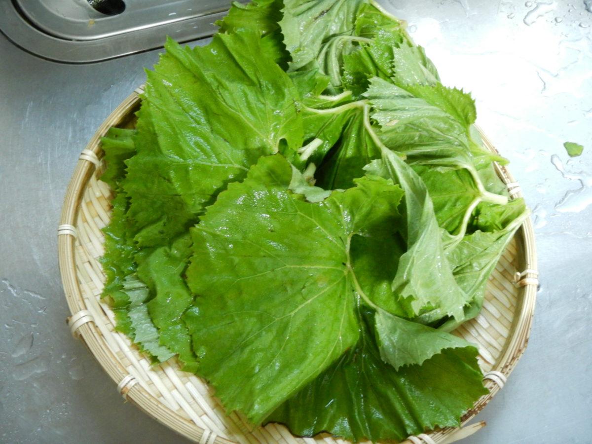 ふきの葉っぱの食べ方とは?佃煮の作り方や下処理のやり方を紹介!