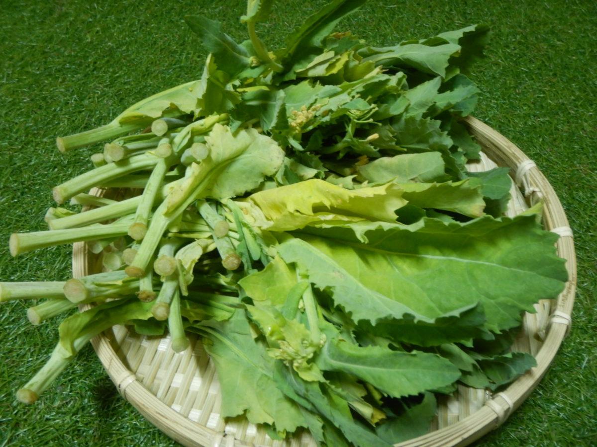 かき菜の食べ方!人気レシピや美味しい調理法とは?花も食べられる?