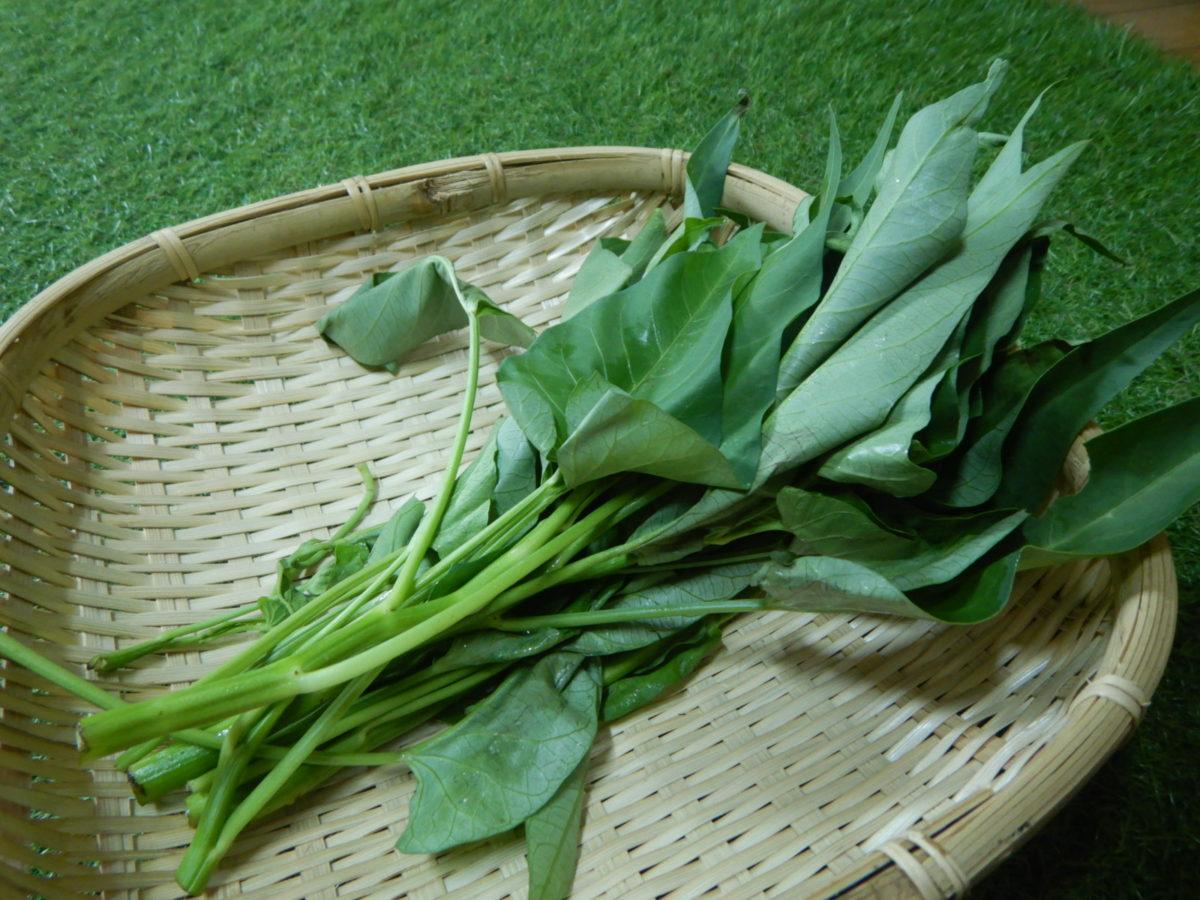 空心菜の美味しい食べ方!タイの炒め物(パックブーン・ファイデーン)のレシピも紹介!