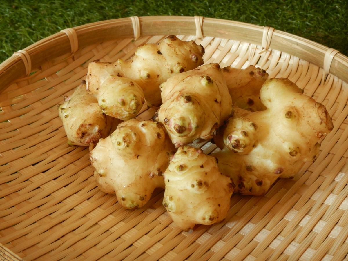 菊芋の美味しい食べ方を検証!生・煮物・パウダー?適した調理法とは?