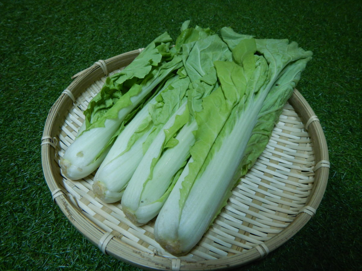 山東菜の食べ方!下ごしらえや美味しい調理法とは?3レシピ作ってみた!